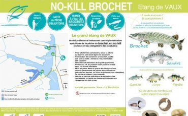 No-Kill Brochet au Grand étang de Vaux